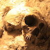 A neanderthal skull has been partially uncovered from it's resting place, a mix