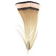 Golden Pheasant feather image
