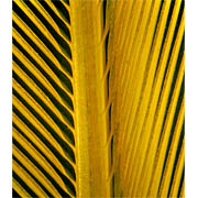 Blue Gold Macaw magnified feather image-bottom view
