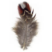 Temminck's Tragopan Pheasant feather image