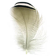 Wood Duck feather image