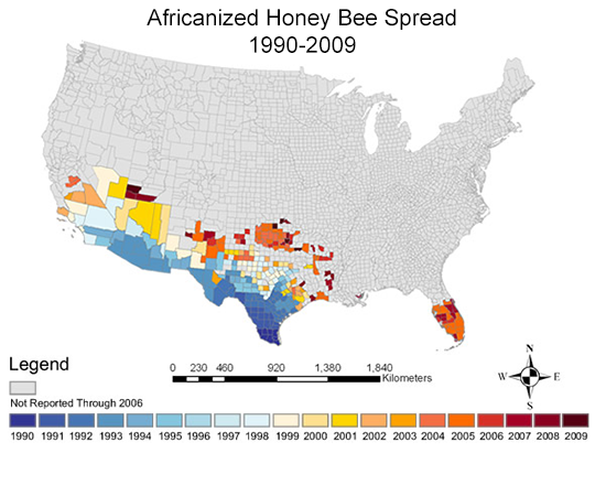 Map showing the spread of Africanized honey bees in the United States.