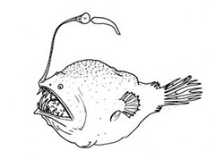 A drawing of an anglerfish, with a lure on its head that attracts prey.