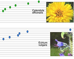 Flower nectar graph