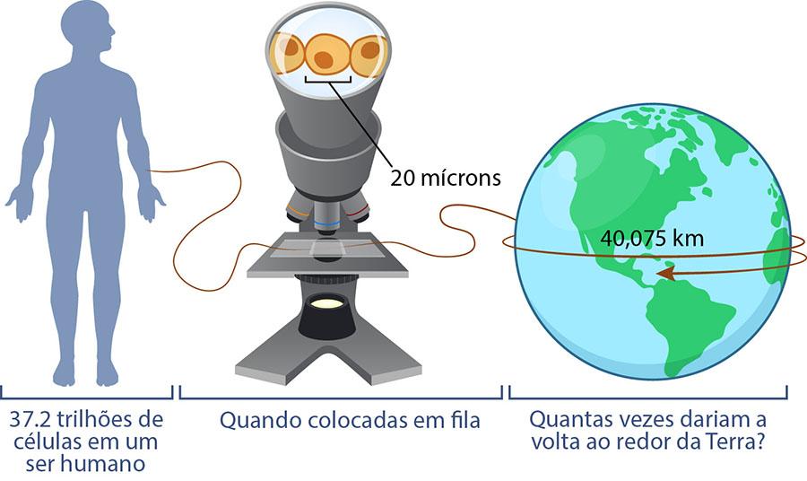 Clulas blocos de construo da vida ask a biologist cells circle earth ccuart Images