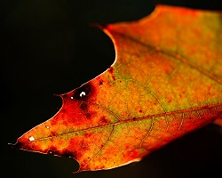 orange colored leaf