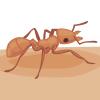 Ant Bits