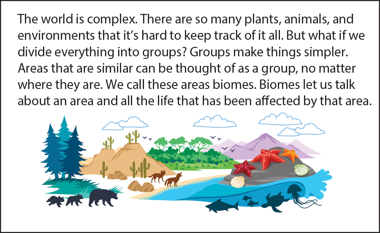 biology reading flashcards biomes of the world asu ask a