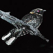 Buff-collared Nightjar thumbnail
