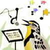 Bird Song Tumbnail