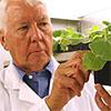 Charlie Arntzen with tobacco plant