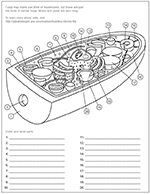 Fungal cell coloring worksheet