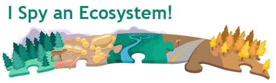 Ecosystems Quiz | ASU - Ask A Biologist