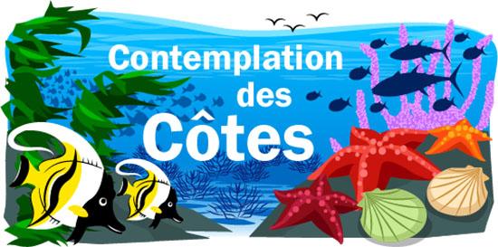Contemplation des Côtes