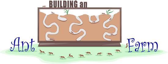 Build An Ant Farm Ask A Biologist
