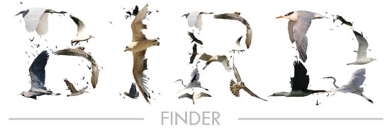 Bird finder graphic
