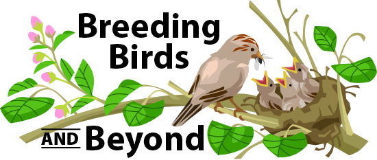 Breeding Birds and Beyond