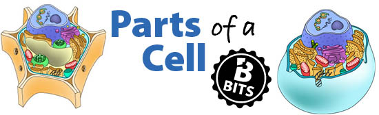 Parts of a Cell Biology Bits