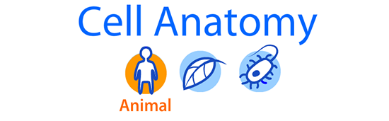 Cell anatomy viewer - animal cells, plant cells, and bacterial cells