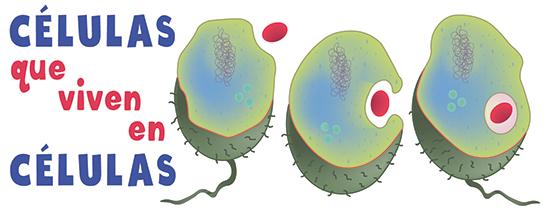 Endosimbiótica
