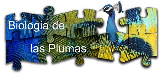 Biologia de las plumas