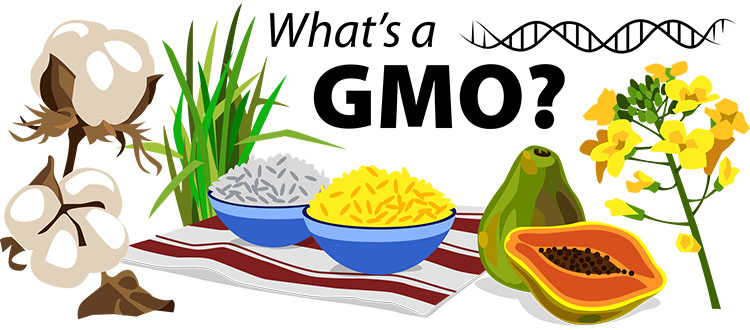 What's a GMO? | Ask A Biologist