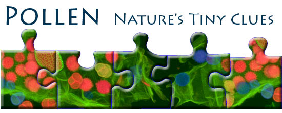 Pollen Nature's Tiny Clues