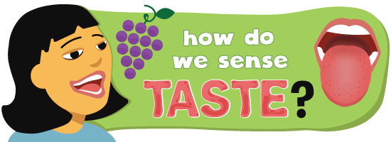 how do we sense taste?