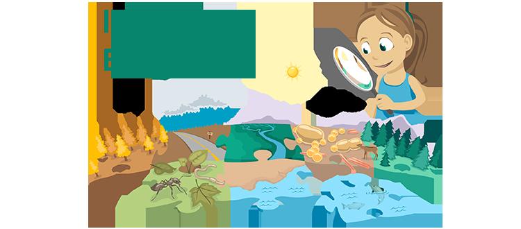 I spy an ecosystem