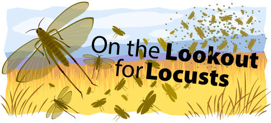 On the Lookout for Locusts