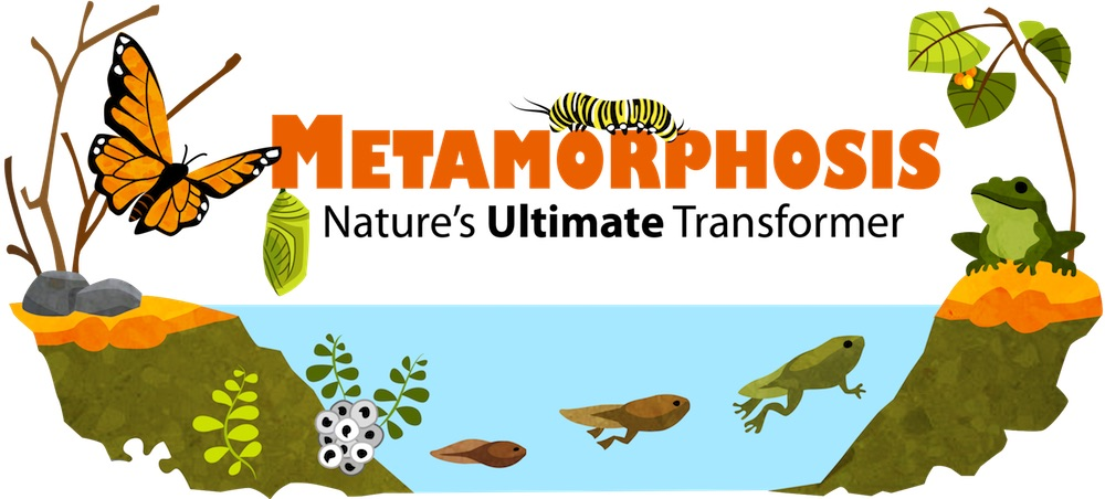 Metamorphosis of Animals