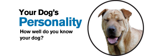 Your Dog's Personality
