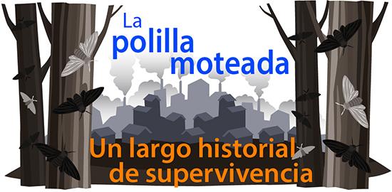 La polilla moteada: Un largo historial de supervivencia