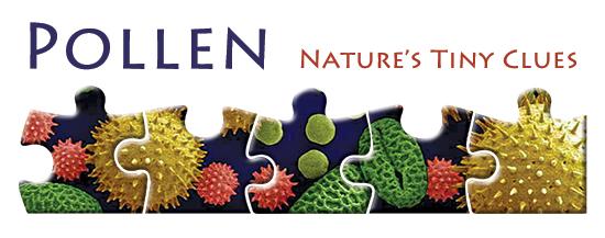 Pollen: Nature's Tiny Clues