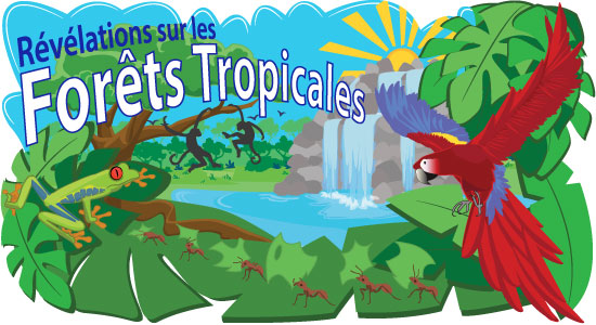 Forêts Tropicales Pluvieuses
