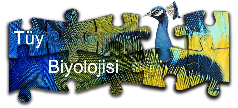 Tüy-Biyolojisi