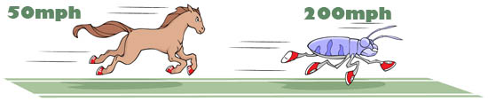 Horse and beetle speed comparison illustration