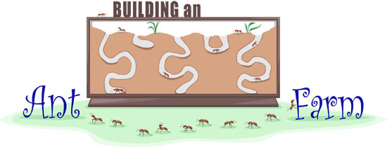 Building an ant farm illustration