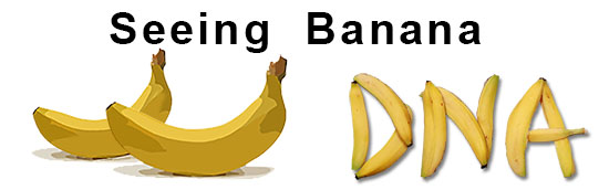 Seeing Banana DNA Activity