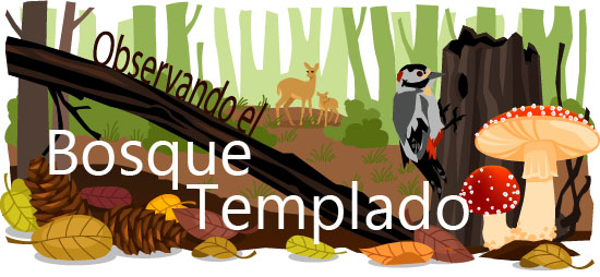 Bosque templado illustracion