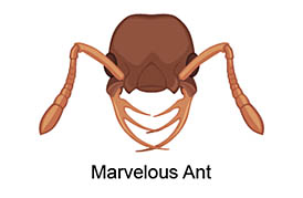 marvelous ant
