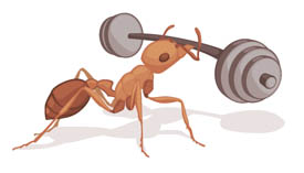 ant lifting weights illustration