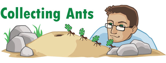 collecting ants header image