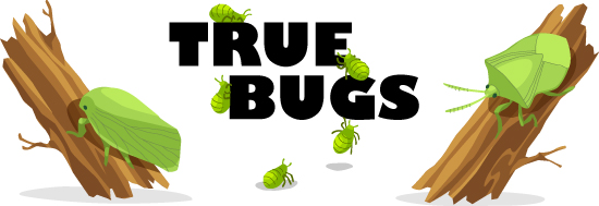 True Bug Header