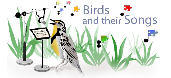 Bird Song Header
