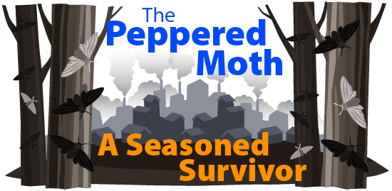 The peppered moth: a seasoned survivor