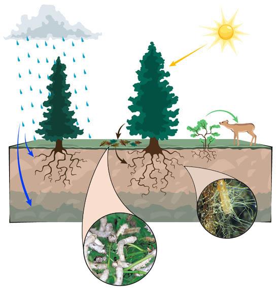 Kujutiste tulemus päringule bacteria in ecosystem