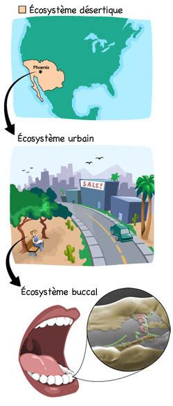 écosystèmes Ask A Biologist