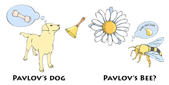 pavlov's bee illustration