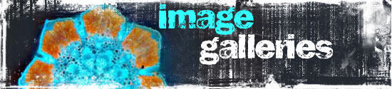 "This is the header image for ""image galleries"""